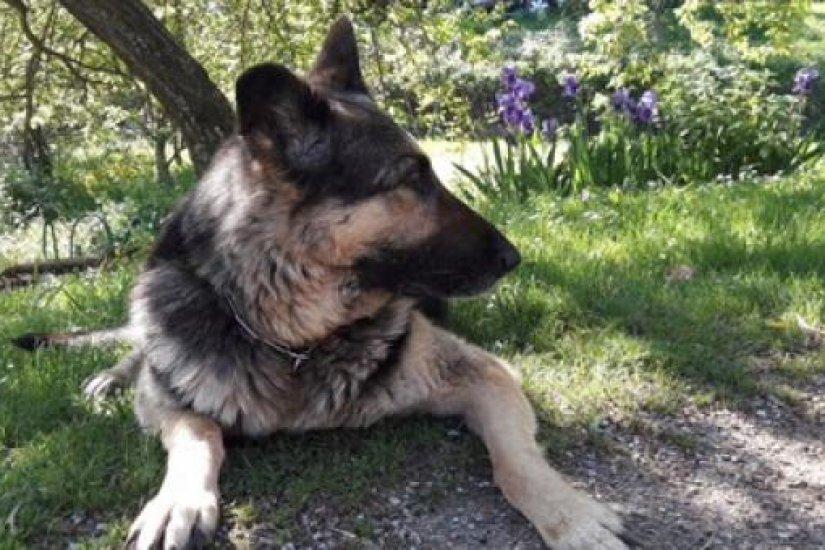 Rex, el gos terapeuta
